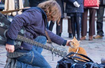 映画【ボブという名の猫 幸せのハイタッチ】のあらすじ